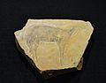 Plaqueta calcària amb cérvola pintada i èquids gravats, Cova del Parpalló, Museu de Prehistòria de València.JPG
