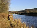 Playing a salmon on the Ettrick Water - geograph.org.uk - 618697.jpg