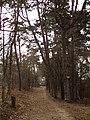 Pod Borinou - panoramio.jpg