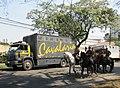 Polícia Montada da Polícia Militar do Paraná.JPG