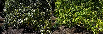 Polarizing filter (photography) - Filtered on right, ⇢. Polarizers are often used to improve the appearance of vegetation.