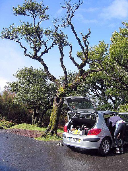 File:Preparing for first training, Fanal, Madeira - 2005.jpg