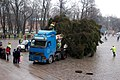 Preparing the Christmas tree.jpg