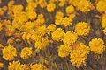 Prins Eugens Flowers (15731587790).jpg