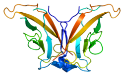 Protein CDH8 PDB 1zxk.png
