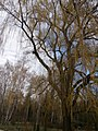Pryvokzal'nyi, Cherkasy, Cherkas'ka oblast, Ukraine - panoramio (2).jpg