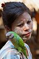 Psittacula alexandri -pet on shoulder- Burma-8a.jpg