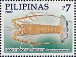 Puerulus angulatus 2009 stamp of the Philippines.jpg