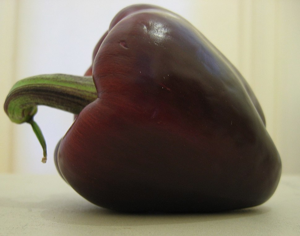 Purple bellpepper