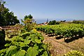 Quinta das Vinhas ^ Cottages, Estreito da Calheta, Madeira, Portugal, 1 July 2011 - Main House - panoramio (1).jpg