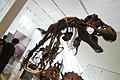 ROM 48 - Tyranosaurus (14336489576).jpg