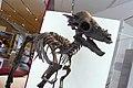 ROM 54 - Pachycephalosaurus (14336493186).jpg