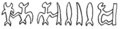 RR sequence of glyphs from line Ev2 (1).png