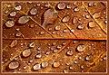Raindrops - Flickr - Stiller Beobachter.jpg