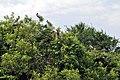 Ranganathittu Bird Sanctuary 21.jpg