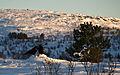 Ravens in Snow (3257171858).jpg