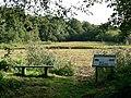Reedbed, Loynton Moss - geograph.org.uk - 254657.jpg