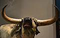 Reproducció d'un ur al museu de la Valltorta, cap.JPG