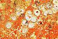 Restes de coquillages et d'algues sur un voile de quille (6).JPG