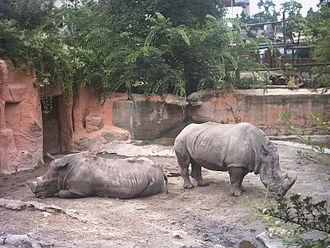 Budapest Zoo and Botanical Garden - White rhinos at Budapest Zoo