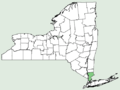 Rhododendron calendulaceum NY-dist-map.png