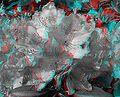 Rhododendronblueten-3D.jpg