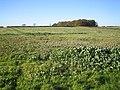 Rickling, Pond Lay Plantation - geograph.org.uk - 280658.jpg