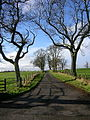 Road to Gillrig Farm - geograph.org.uk - 287622.jpg