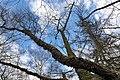 Rombergpark-100331-11668-Fluss-Birke.jpg