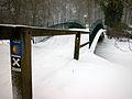 Rombergpark 4.jpg