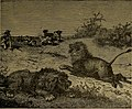 Roosevelt's African trip; the story of his life, the voyage from New York to Mombasa, and the route through the heart of Africa, including the big game and other ferocious animals found in the course (14565205159).jpg
