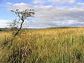 Rough grazing on Yethouse Hill - geograph.org.uk - 549516.jpg