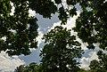 Royal Botanic Gardens, Kew - panoramio (3).jpg