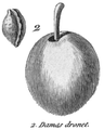 Rozier - Cours d'agriculture, tome 8, pl. 31, damas dronet.png