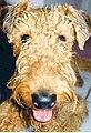 Rufus2wiki.jpg