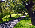 Rymill park path.jpg