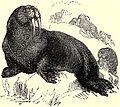 SFR b+w - walrus.jpg