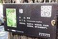 SZ 深圳 Shenzhen 鹽田區 Yantian District 深鹽路 Shenyan Road Greenway tree 樟樹 Cinnamomum camphora sign n QR Code intro Sept 2017 IX1.jpg
