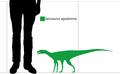 Sacisaurus scale diagram.png