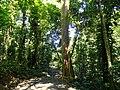 San Juan Botanical Garden - DSC07016.JPG
