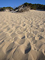 Sand dunes in sardegna.jpg