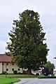 Sankt Aegidi - Naturdenkmal nd178 - Fischerlinden in Oberleiten - Winterlinden (Tilia cordata).jpg