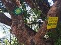 Save Western Ghats awareness Sticker .jpg