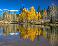 Scenic fall colours along Utah Hwy 14 - Duck Lake reflections at 2625 m - (22798159152).jpg