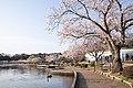 Semba Park, Ibaraki 12.jpg