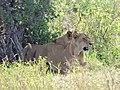 Serengeti 9 (14514027289).jpg