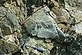 Serpentinite (East Dover Ultramafic Body, Ordovician; roadcut east of East Dover, Vermont, USA) 2.jpg