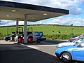 Service station with cows - geograph.org.uk - 228650.jpg