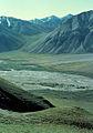 Sheenjek-folyo volgye alaszkai vadjuhokkal.jpg