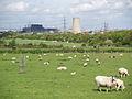 Sheep pasture by Eston Road - geograph.org.uk - 1280347.jpg
